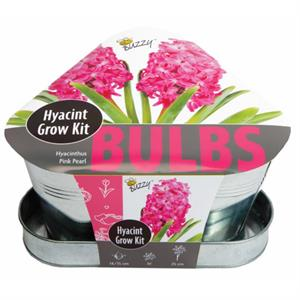Buzzy® Bulbs Triangle Tray Hyacinthen Rose (3)